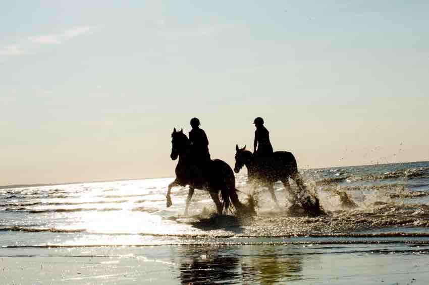 activité cheval deauville